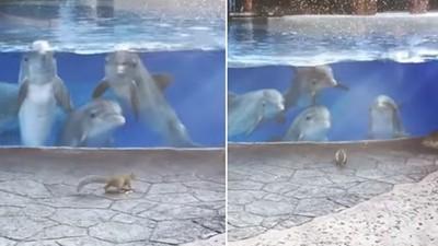 當海豚遇到松鼠...歪頭、傻笑、看呆了!