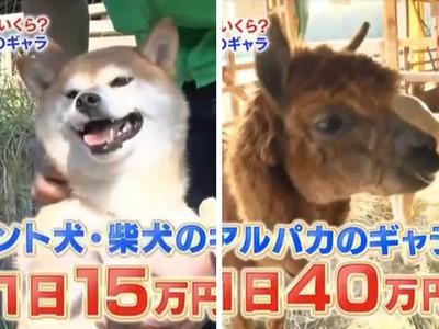 「動物通告費」曝光!拍一天廣告賺4萬,日薪打趴人類月收入