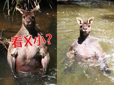 偷拍「袋鼠界館長」泡澡!一臉「看X小」水中挺胸肌怒瞪
