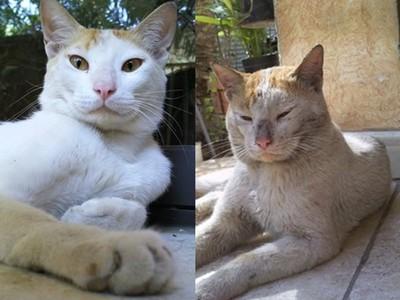 貓兄妹相繼離家失蹤,8個月後...哥哥滿身傷帶著妹妹回家