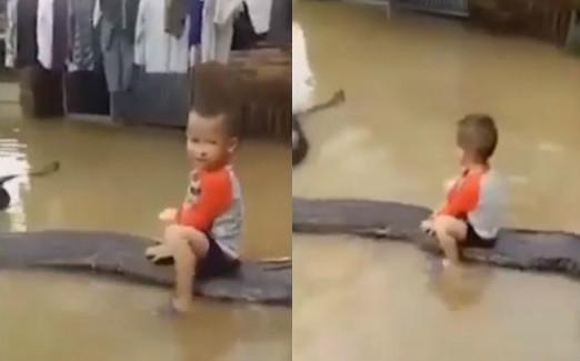 ▲▼越南小男童相當勇敢,坐在蟒蛇身上嬉戲。(圖/翻攝自YouTube/Svetzari)