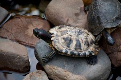 一夜少64隻 日動物園又丟失瀕危烏龜