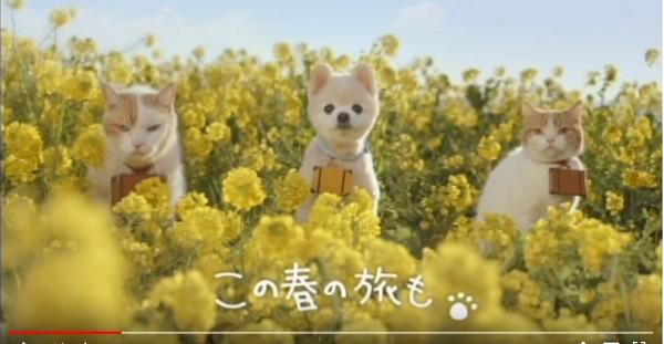 ▲「俊介君」紅到拍旅遊廣告。(圖/翻攝自YouTube)