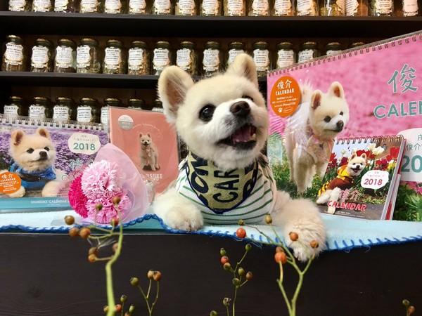 ▲「俊介君」發行寫真集、年曆都大賣。(圖/翻攝自shun mama推特)