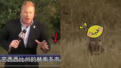 絕跡猛獸出沒!記者冒死深入叢林...發現一隻萌獸