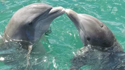 不只會尻槍吸毒!海豚用「獨一叫聲」當名字 好兄弟還懂用鰭擊掌