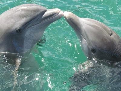 抓到了!研究發現鯨豚愛講話,海豚最八卦、虎鯨滿嘴垃圾話