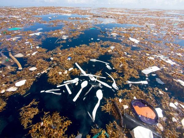 ▲ 塑膠餐具漂浮當中,影響環境生態。(圖/翻攝自Caroline Power Photography粉絲專頁)
