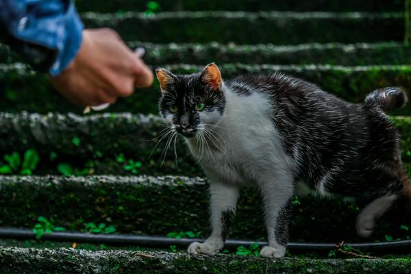 ▲猴硐,猴硐貓村,猴硐貓街,餵貓,世界六大賞貓景點。(圖/記者林世文攝)