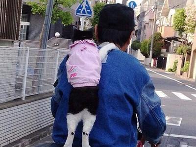 學貓叫找女童攀談!大叔無辜被當痴漢 家長:一定要報警