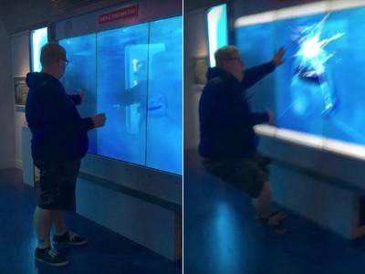 拍打魚缸激怒鯊魚,手還放在玻璃上...下一秒GG了