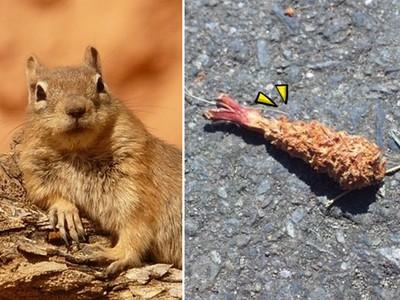 森林裡「堆滿炸蝦」不是人類亂丟 全是松鼠吃過的唷