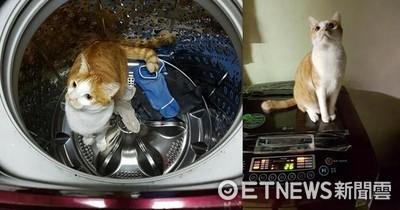 掉洗衣機出不來 媽:真的是貓?