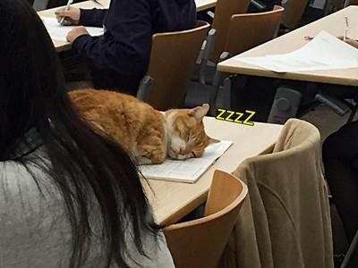 上課直接躺平也可以!日本大學「喵大人」想幹嘛就幹嘛