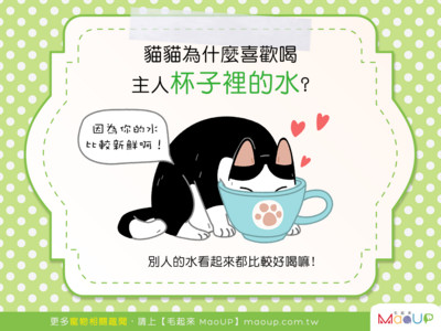 貓咪詭異行為大揭密! 為何愛偷喝主人杯子裡的水?