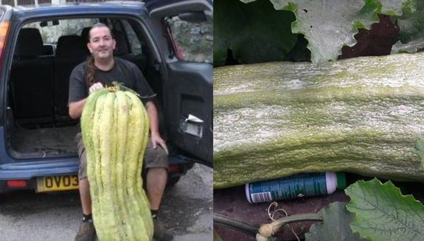 ▲▼庫克(John Handrahan-Cook)喜歡種植巨大蔬菜。(圖/翻攝自臉書/John Handrahan)