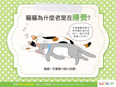 有這麼累嗎主子? 揭貓咪「愛睡覺」背後原因...正常der