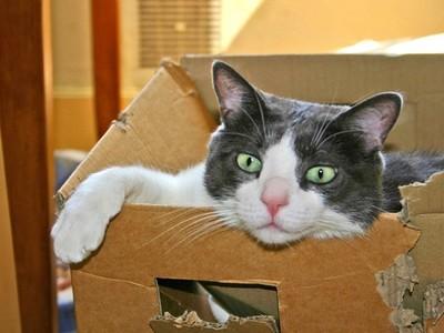 你的貓咪已出貨!貓咪鑽紙箱不小心寄出自己,4天後才被發現