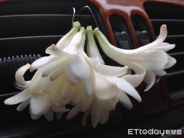 玉蘭花產量銳減,賣花人開始用夜來香取代。(資料照)