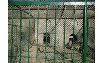網控八達嶺動物園「拿狗餵虎」