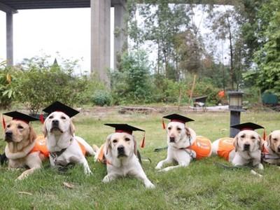 畢業考歐趴!導盲拉拉排排坐,戴學士帽、趴草地拍畢業照