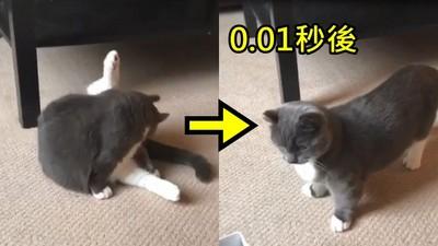 舔該邊被抓包「摺疊貓瞬間彈出來」 網爆笑:媽媽都不敲門的
