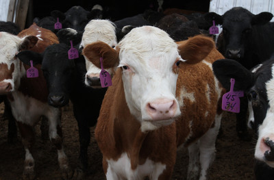 美佛羅里達州爆「第6例狂牛症」