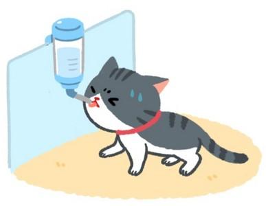 貓咪都用什麼喝水? 滾珠飲水器是大忌...恐刮傷舌頭!
