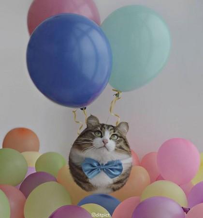 ▲▼動物變成「氣球」。(圖/Aditya Aryanto授權提供)