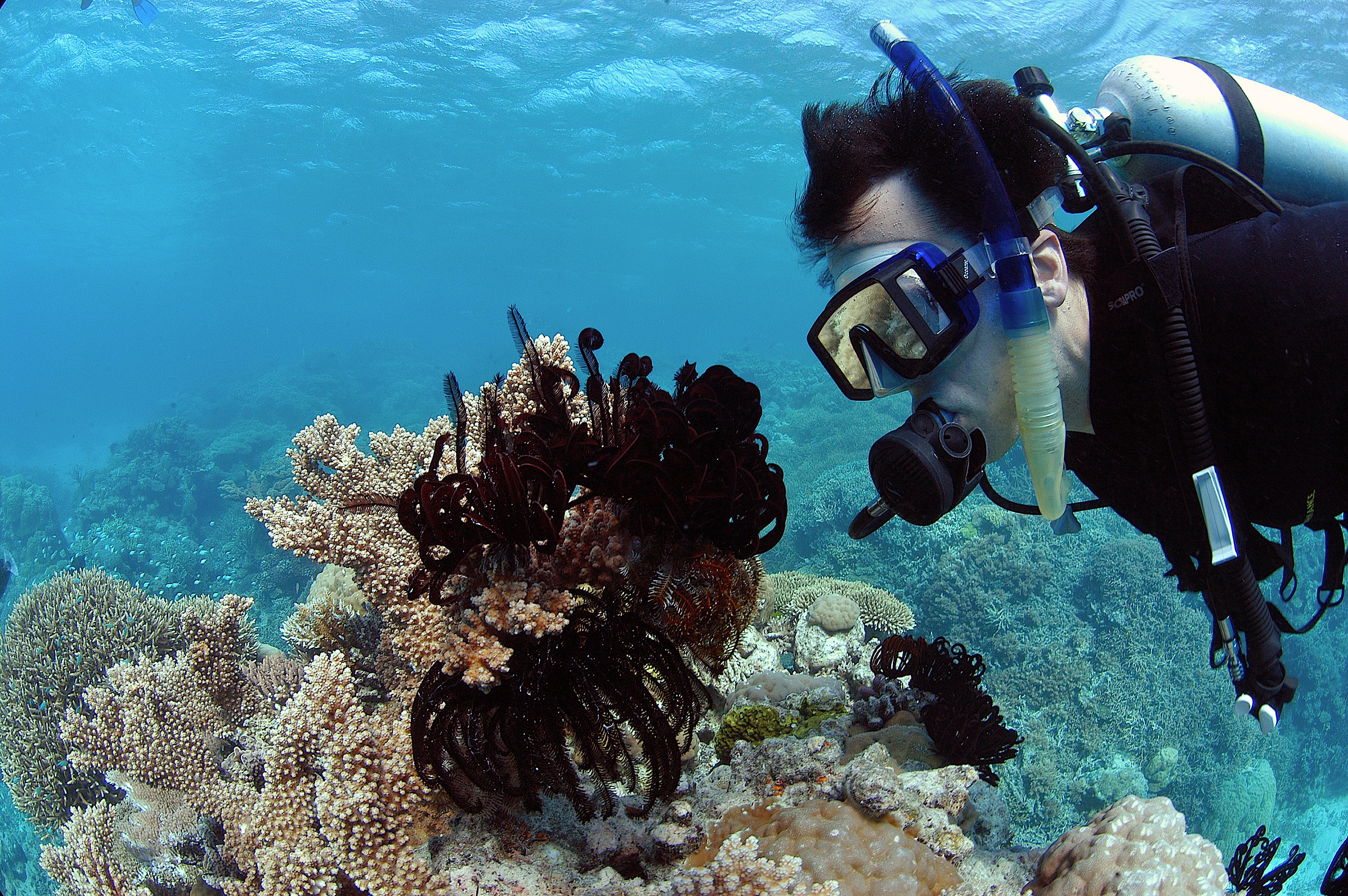 ▲▼ 澳洲,大堡礁。(圖/達志影像/美聯社)
