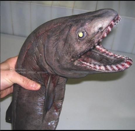 ▲▼俄羅斯漁夫捕獲深海魚類。(圖/翻攝Роман Федорцов IG)