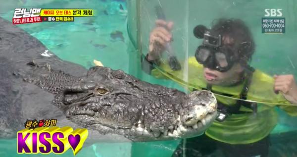 ▲▼《RM》製作單位:跟790kg鱷魚親親! 李光洙當場臉綠(圖/翻攝自SBS)