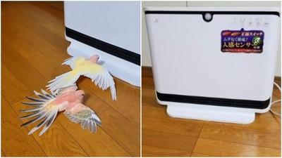「排隊吹暖氣的鸚鵡」一隻輪一隻 怕冷還是堅持守秩序❤