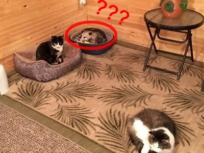 奶奶收編三隻喵,孫子迫不及待跑去看...這隻不是啦!