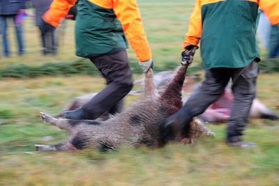 德2.2萬獵人出動 捕殺維護生態