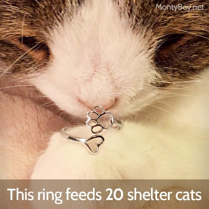 ▲▼「無鼻網紅貓」曾病到失禁 現擁40萬粉還有同名珠寶品牌(圖/翻攝自Monty粉專)