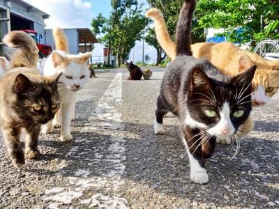 「交出保護費!」大批野貓8+9逼近,還不快讓路叫大哥