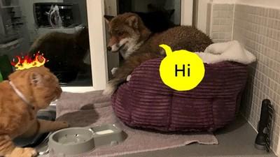 橘貓散步完回家,發現「悠哉尖嘴喵」巴著自己的暖窩不走