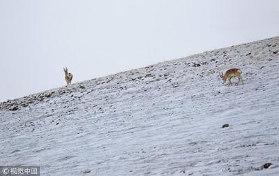 陸證實人類4萬年前就登青藏高原