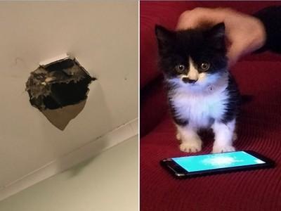 租房天花板狂漏水,沒想到暴風夜竟掉出…一隻小奶貓!