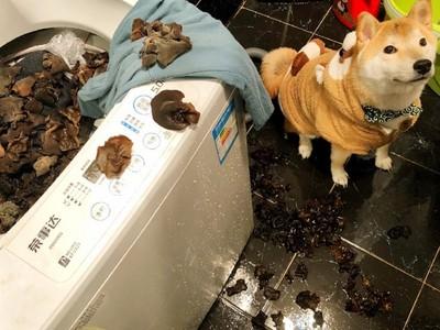 「孝順柴」用洗衣機幫煮晚餐 媽見海量木耳湯崩潰