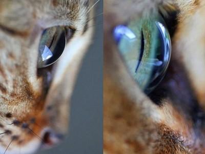 比琉璃還剔透!奴才愛的視角,捕捉「貓眼」勾魂瞬間