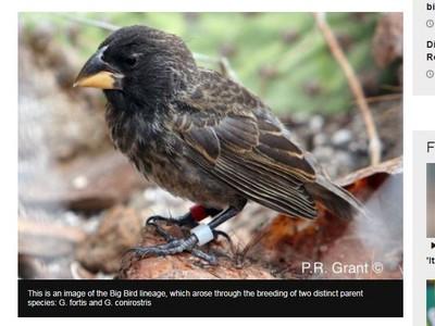 史上最快!「大鳥」2代完成演化