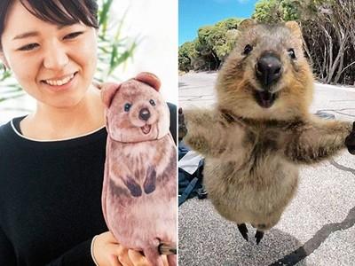 全世界最會自拍的動物!短尾矮袋鼠變成收納袋,可以帶回家啦