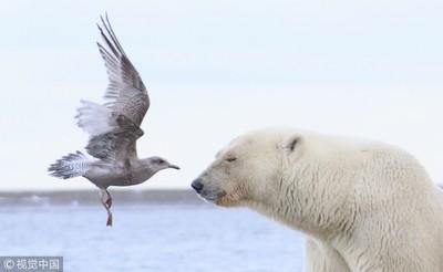 胖丁呷麵|吹冷氣跟北極熊到底有何鬼關聯?