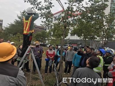 台南市訓練正港樹木修剪美容師