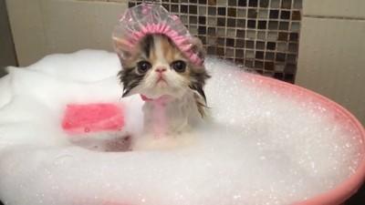 浴帽不只防頭髮噴濕 功能超多以後住旅館都會順手帶它回家