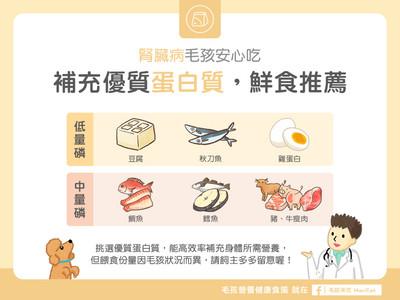 汪喵健康吃!優質蛋白質「6大食物」 腎臟病毛孩免驚