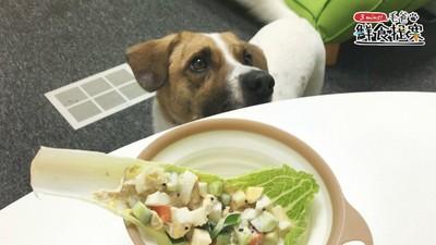 動手做狗狗清爽料理! 「嫩雞彩蔬沙拉船」酸甜好滋味
