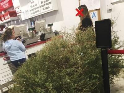 「枯死聖誕樹」也敢退?Costco佛心照收 奇葩女還怨:怎沒退全額
